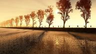 d-autumn