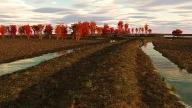 g-autumn
